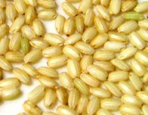 ●無農薬栽培 有機JAS もち玄米 (国内産) 1kg×6商品取り寄せのため、在庫確認後ご連絡いたします。長期欠品の際はキャンセルさせていただく場合がございます。モチ玄米 餅玄米