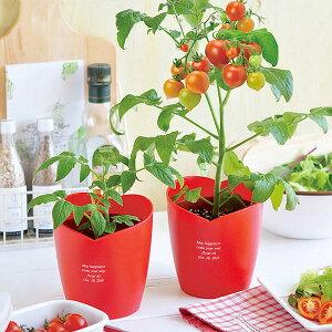 【名入れ】ハートポット栽培キット ミニトマト 敬老の日 手作りキット
