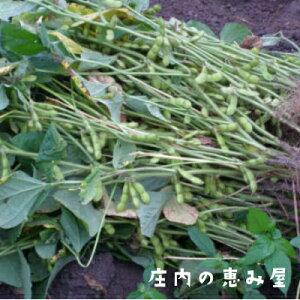 【送料無料】白山だだちゃ豆 晩生 1.5kg