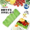 弁当 仕切り / ベジカベ【ポイント 倍】【日本製】【送料無料】