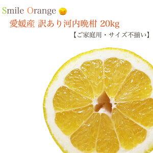 【送料無料(一部別途)】愛媛県産 訳あり河内晩柑 20kg