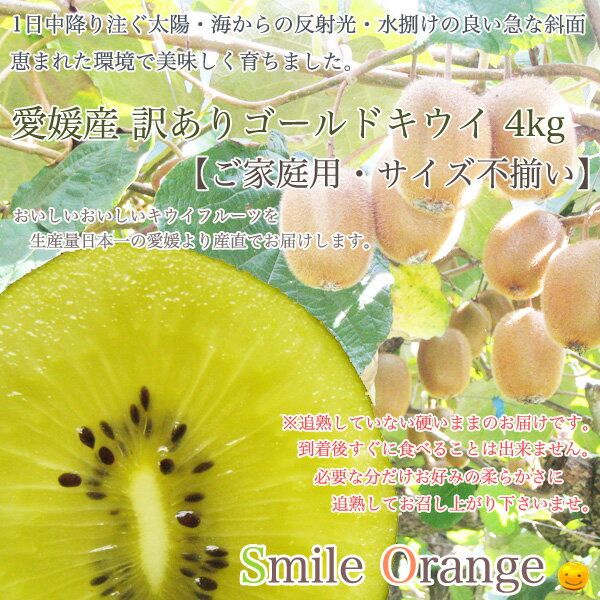 【送料無料】愛媛産 訳ありゴールドキウイフルーツ5kg【ご家庭用・サイズ不揃い】