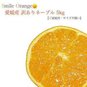 【送料無料(一部別途)】愛媛県 訳あり完熟ネーブル 5kg