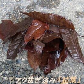 越冬 や 隠れ場所 に使える アク抜き 済み「 枯葉 」