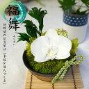 和風 プリザーブドフラワー 胡蝶蘭 卒寿祝い・白寿祝い・百寿祝い(紀寿祝い)におすすめな白い花の和風プリザーブド…