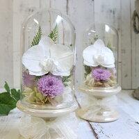 プリザーブドフラワーガラスドーム胡蝶蘭お供え初盆喪中見舞い寒中見舞いこちょうらん白仏壇花