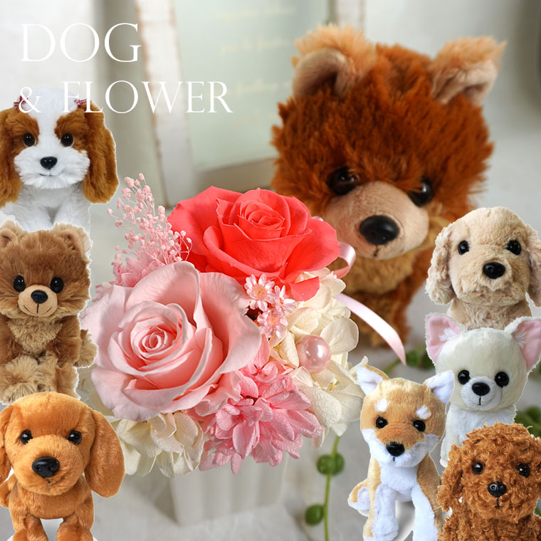わんこ好きなあの人に♪「わんだ♪プチフラワーセット」プリザーブドフラワー ブリザーブドフラワー ブリザーブドフラワー 犬 ぬいぐるみ 誕生日 結婚記念日 結婚祝い 結婚式 電報 かわいい 卒園 入学
