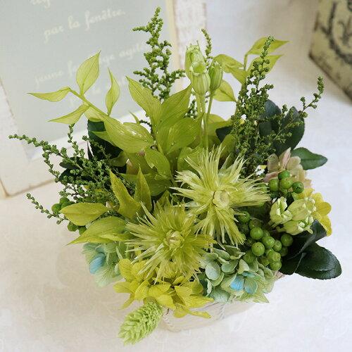 新生活グリーン父誕生日「ナチュール」プリザーブドグリーン観葉植物プリザーブド昇進祝い退職祝い男性お祝い新築祝いインテリアグリーン