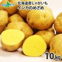 北海道産 じゃがいも インカのめざめ S-Lサイズ 10kg前後 北海道 ジャガイモ じゃが芋 芋 インカ 北国からの贈り物 送…