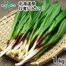 北海道産 行者にんにく アイヌネギ 1kg 生冷蔵 ◆出荷…