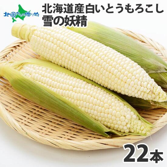 北海道産ホワイトコーンとうもろこし22本