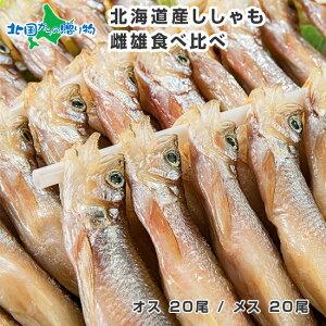 北海道 本ししゃも 雌雄 食べ比べ セット 40尾 北海道産 シシャモ 食材 セット グルメ 北海道 ししゃも オス メス プレゼント 食べ物 ギフト 魚 海鮮 おつまみ ギフト セット 家飲み 父の日 ギ