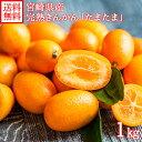 宮崎県産 完熟きんかん たまたま 約1kg きんかん/金柑/柑橘/ 送料無料 ◆出荷予定:1月下旬