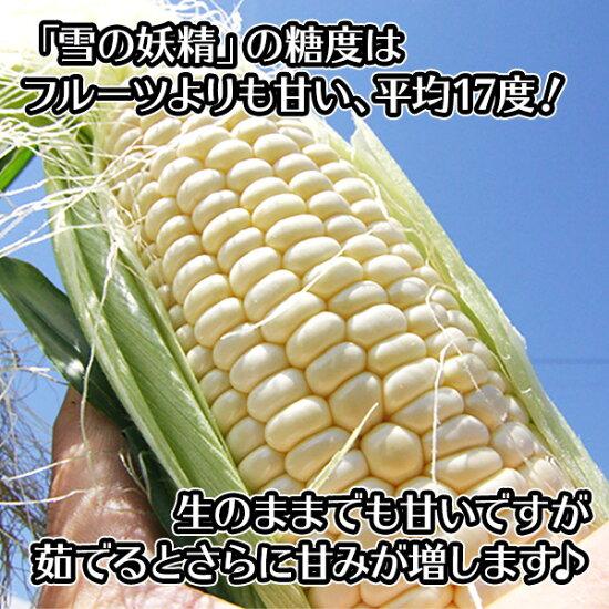 北海道産ホワイトコーンとうもろこし11-12本