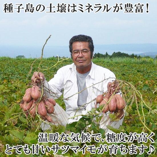 種子島産安納芋6-10本前後/計2kg前後