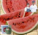 お中元 ギフト 大月さんちのスイカ♪信州波田町から早朝の涼しいうちに収穫してお届け!期間限定・数量限定なのでお早めに!