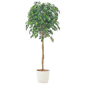 人工樹木 イトーキ カレン ベンジャミン H150cm 【自社便/開梱・設置付】