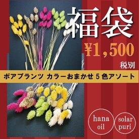 【即納】 ドライフラワー 花材セット ポアプランツ 5色アソート