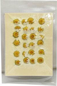 【即納】クリアリウム 花材 押し花 クリサンセマム ホワイト 24輪 固まるハーバリウム