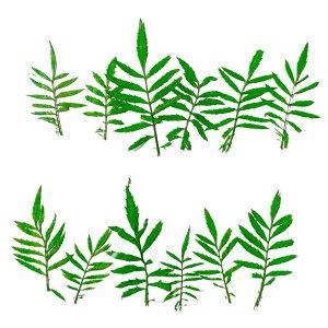 【即納】固まるハーバリウム クリアリウム 山菊リーフ 12枚 押し花 葉