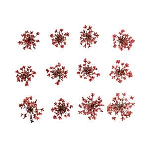 【即納】固まるハーバリウム クリアリウム レースフラワー ローズピンク 12枚 押し花 花