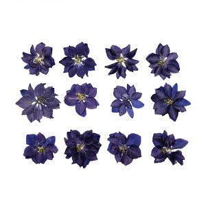 【即納】固まるハーバリウム クリアリウム ラークスパー ヴァイオレット 12枚 押し花 葉
