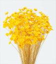 【即納】スターフラワー・ブロッサム イエロー 30191-521 4988489208161 スモールフラワー プリザーブドフラワー花材 …