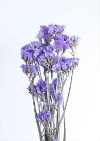 【即納】 スターチス【ライトパープル 小分け】spds0009 そらプリ ドライフラワー 花材 資材