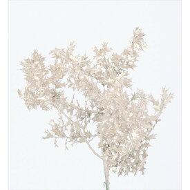 【即納】 ソフトミニヒイラギ プラチナ 大地農園 ミニサイズ 白 花材 プリザ ギフト お祝い インテリア 玄関 リビングルーム プレゼント 贈り物 結婚祝い 誕生日プレゼント