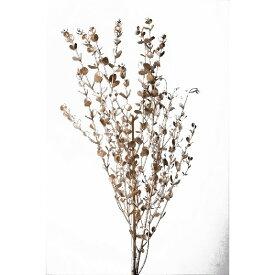 【即納】 プリザーブドフラワー 材料 グニーユーカリ プラチナ 2本 大地農園 白 銀 花材 プリザ ギフト お祝い インテリア 玄関 リビングルーム プレゼント 贈り物 結婚祝い 誕生日プレゼント 敬老の日