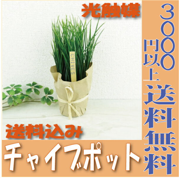【即納】 光触媒 チャイブポット 観葉植物