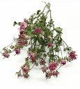 【即納】ドライフラワー 花材 リトルウッズ ピンク 小分け そらプリ