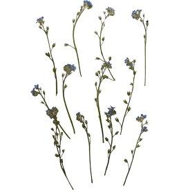 【即納】 押し花 ドライフラワー わすれな草 ナチュラル 枝付き 12枚 固まるハーバリウム クリアリウム ドライアレンジ ギフト 花材 草花 資材 インテリア プレゼント 贈り物 お見舞い シンプル ハンドメイド オリジナル あす楽