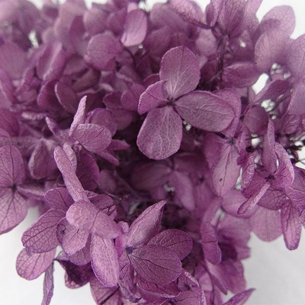 【即納】 プリザーブドフラワー 花材 ソフトピラミッドアジサイ ヘッド【ヴァイオレット 小分け】大地農園