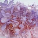 【即納】 プリザーブドフラワー 花材 ソフトピラミッドアジサイ ヘッド【ピンクパープル 小分け】あじさい 紫陽花 大…