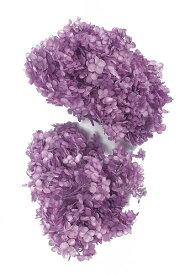 【即納】 プリザーブドフラワー 花材 30%OFF ソフトアナベルヘッド アジサイ【パープル 箱】 大地農園