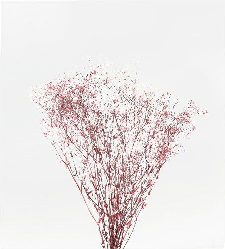 【即納】 プリザーブドフラワー 花材 30%OFF ミニカスミソウ フラワーベール 【白/ローズ 袋 約22g入】大地農園