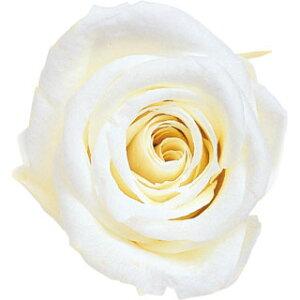 【即納】 ブリザードフラワー 花材 ピッコラブロッサム【パールホワイト】1輪 フロールエバー