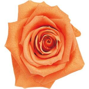 【即納】 ブリザードフラワー 花材 ピッコラブロッサム【サンセットオレンジ】1輪 フロールエバー