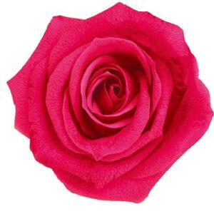 【即納】 ブリザードフラワー 花材 ピッコラブロッサム【ホットピンク】1輪 フロールエバー