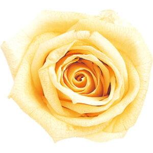 【即納】 ブリザードフラワー 花材 ピッコラブロッサム【ソフトイエロー】1輪 小分け フロールエバー
