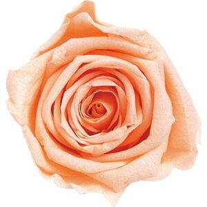 【即納】 ブリザードフラワー 花材 ピッコラブロッサム【シャーベットオレンジ】1輪 フロールエバー