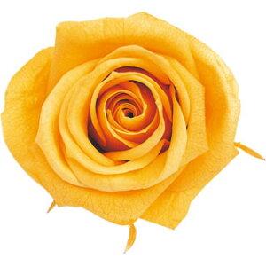 【即納】 ブリザードフラワー 花材 ピッコラブロッサム【ゴールデンイエロー】1輪 フロールエバー
