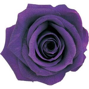 【即納】 ブリザードフラワー 花材 ピッコラブロッサム【バイオレット】1輪 小分け フロールエバー