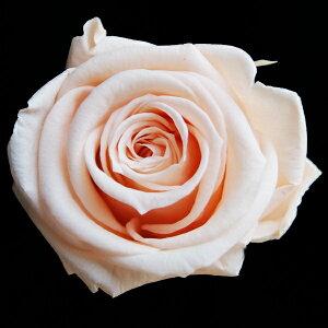 【即納】 ブリザードフラワー 花材 ベイビー ローズ【ピーチ 小分け 1輪入】 フロールエバー