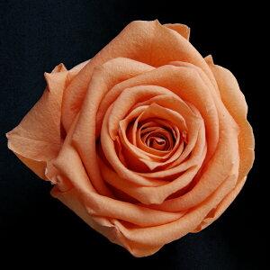 【即納】 ブリザードフラワー 花材 ベイビー ローズ【サンセットオレンジ 小分け 1輪入】 フロールエバー