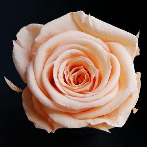 【即納】 ブリザードフラワー 花材 ベイビー ローズ【シャーベットオレンジ 小分け 1輪入】 小分け フロールエバー