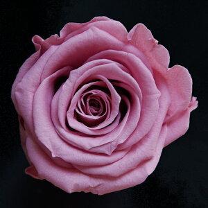 【即納】 ブリザードフラワー 花材 ベイビー ローズ【チェリーブロッサム 小分け 1輪入】 フロールエバー