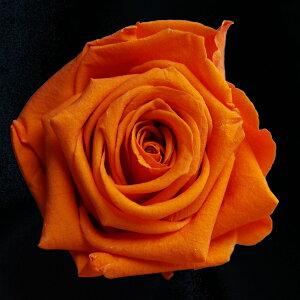 【即納】 ブリザードフラワー 花材 ベイビー ローズ【タンジェリンオレンジ 小分け 1輪入】 フロールエバー