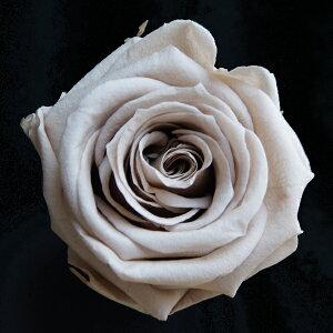 【即納】 ブリザードフラワー 花材 ベイビー ローズ【ヘーゼルナッツ 小分け 1輪入】 フロールエバー